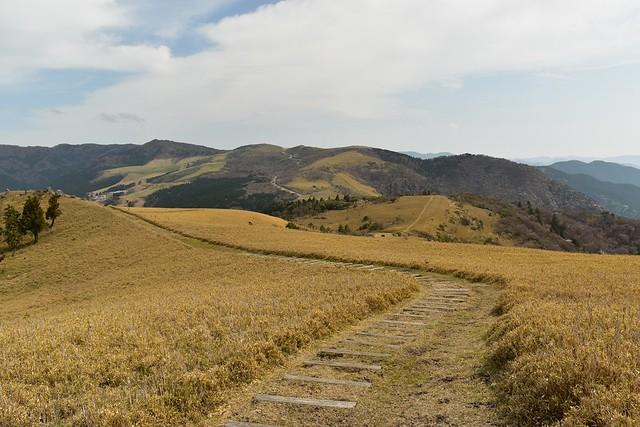 伊豆山稜線歩道 宇久須峠への笹道