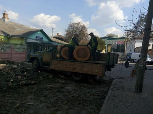 обризають дерева 2
