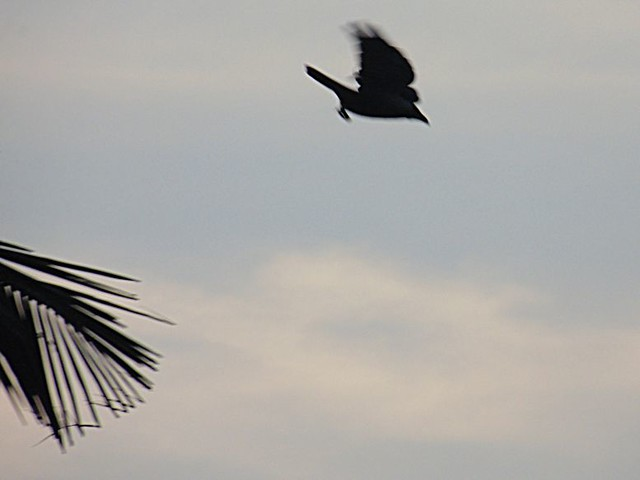 Bird Watching - Bird In Flight