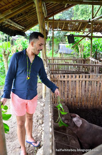 halfwhiteboy - the farmhouse in aloguinsan cebu 11