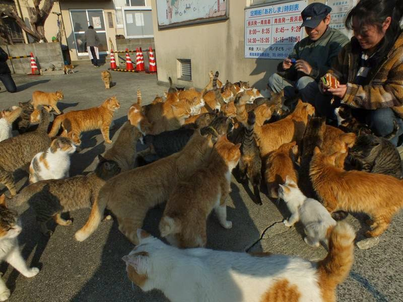 Aoshima-Japanese-Cat-Island-006