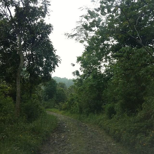 Jalan menuju Bumi Perkemahan Sukamantri