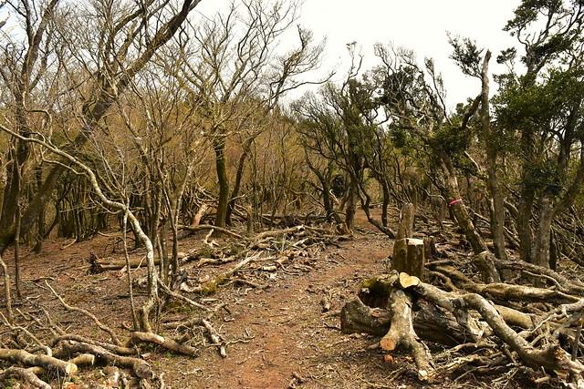 伊豆山稜線歩道の樹林帯