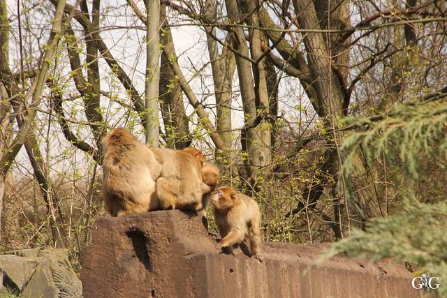 Frühlingstag Tierpark Friedrichsfelde am 02.04.2017112