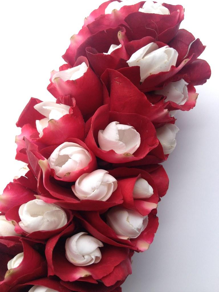 mogra flower in rose petals the white flowers are mogra fl flickr