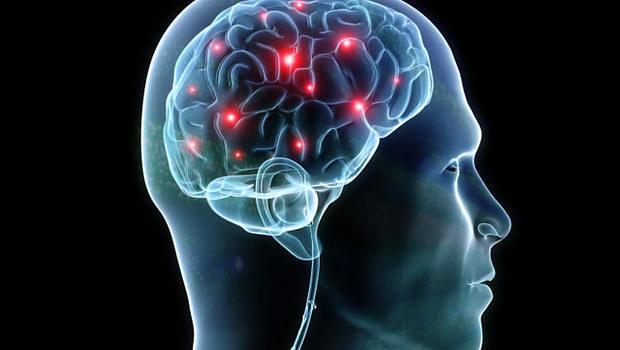 Resultado de imagen de brain