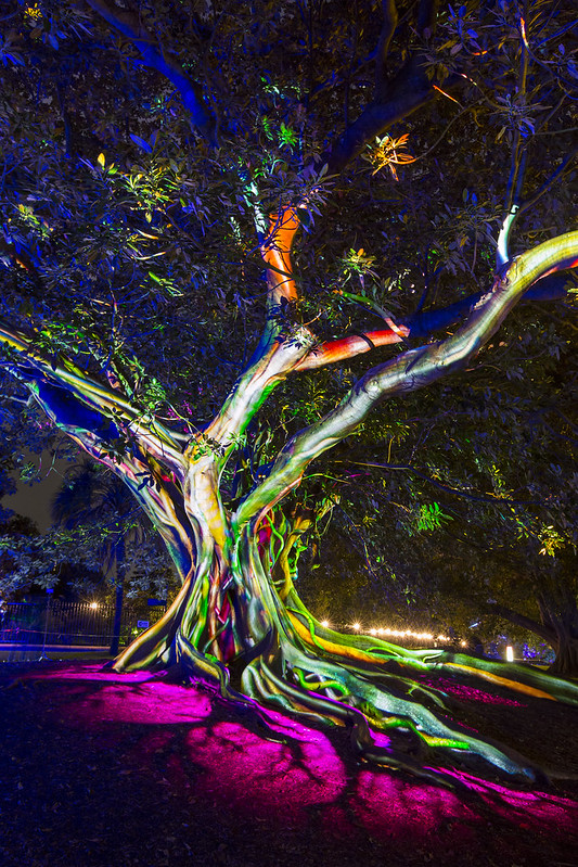 Vivid Festival 2016 - Botanic Gardens precinct
