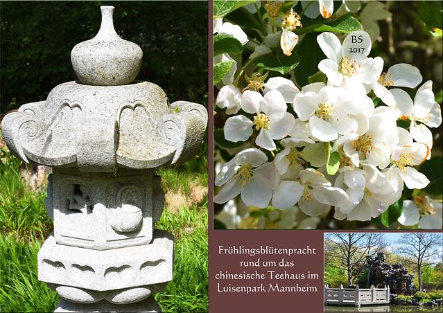 Luisenpark Mannheim April 2017 ... Chinesisches Teehaus, chinesischer Garten ... Blütenpracht im Frühling ... Päonie, Magnolie ... Fotos und Collagen: Brigitte Stolle