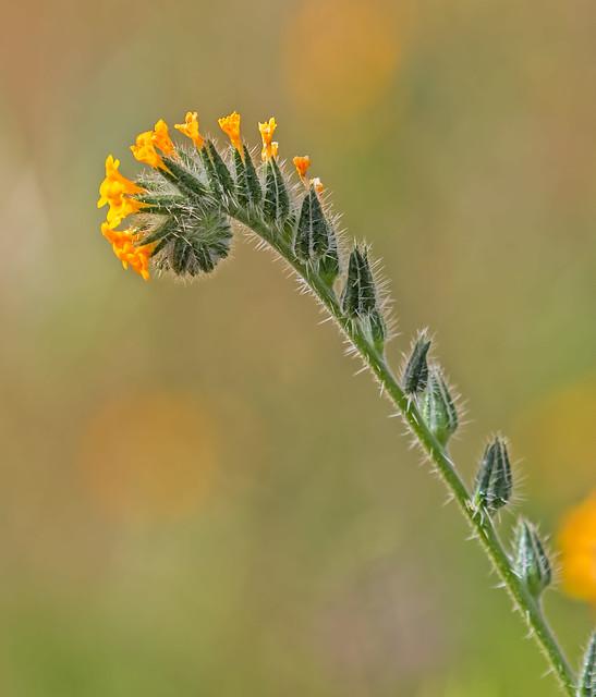 x-Flower-49-7D2-040817