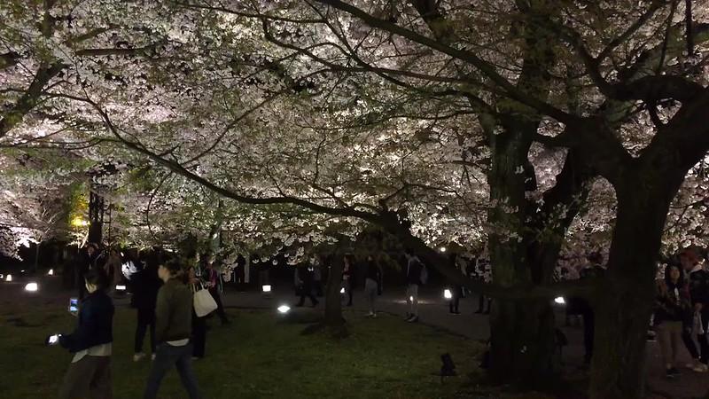 東寺 ライトアップ