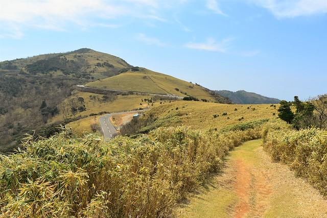 達磨山への笹の登山道