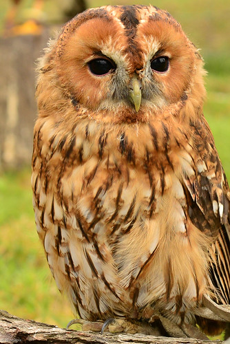 Image Result For Owl From Winnie