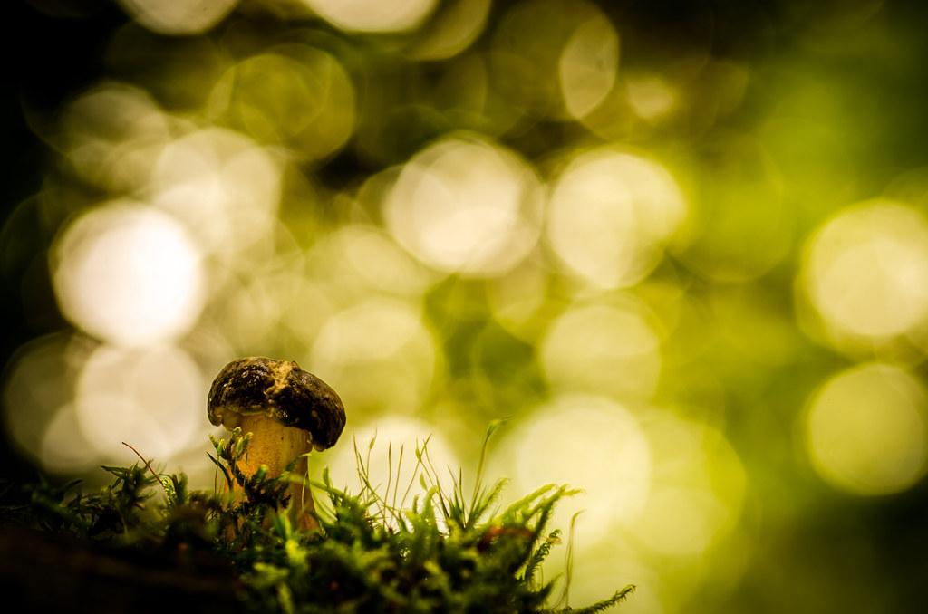 Herfst laatst een ringflitser gekocht om een te experiment flickr - Om een e b e bbinnenkap te creeren ...