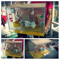 Chuồng pet.mon Www.thobo.vn Www.hamstermiendathua.vn Www.hamstermonkeyshop.com