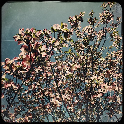 #Spring is back! | by StickyQuote