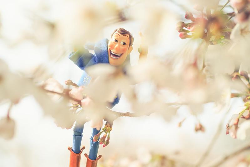 WOODY看櫻花|上野公園