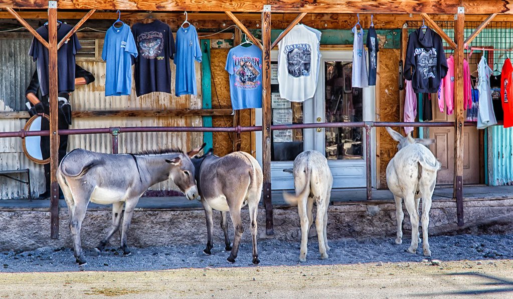R_Oatman_20Sep2014-75_HDR-Edit.jpg