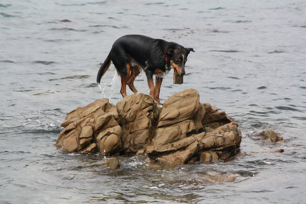 Dog Training Throw Tags