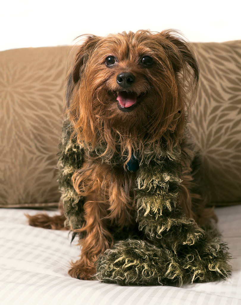 Free Dog Scarf Knitting Pattern
