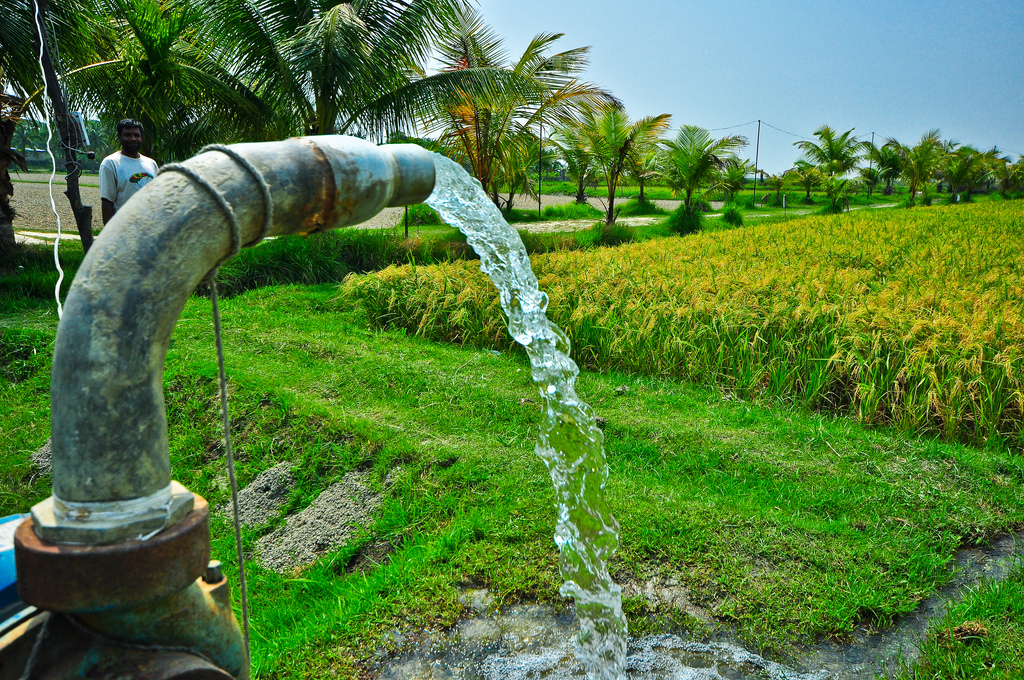 Irrigation of rice field using water pump. IRRI | OLYMPUS ...