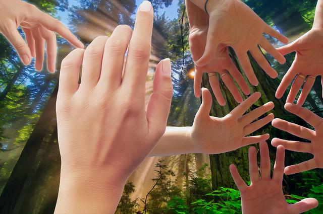 Finger Rays