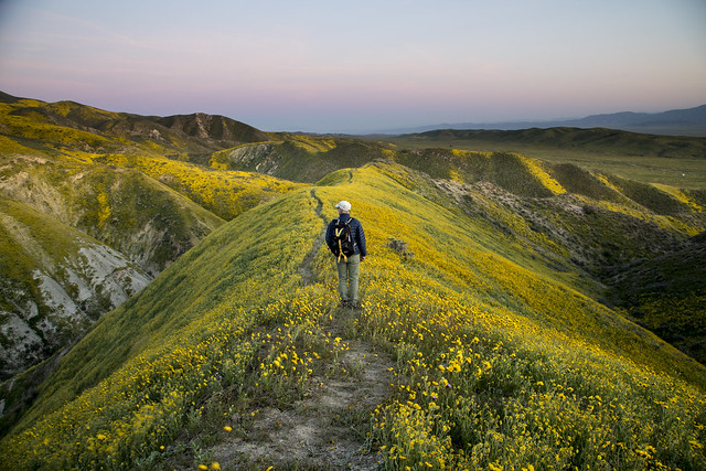 Super Bloom 2017 at Carrizo Plain National Monument
