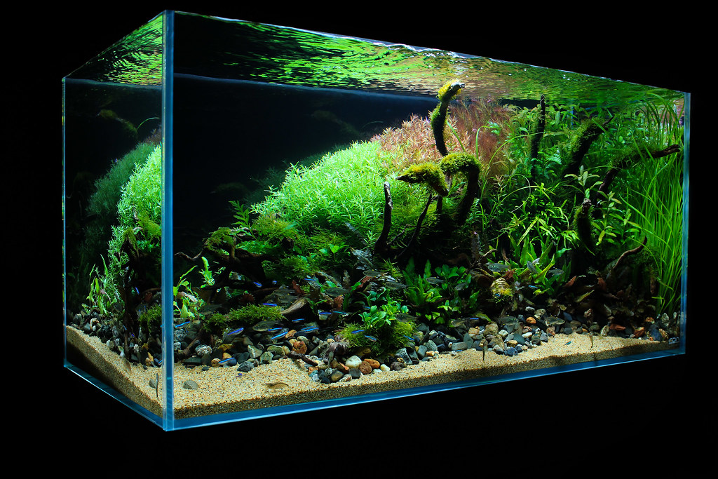 Ada Aquascape Gallery - Aquascape Ideas