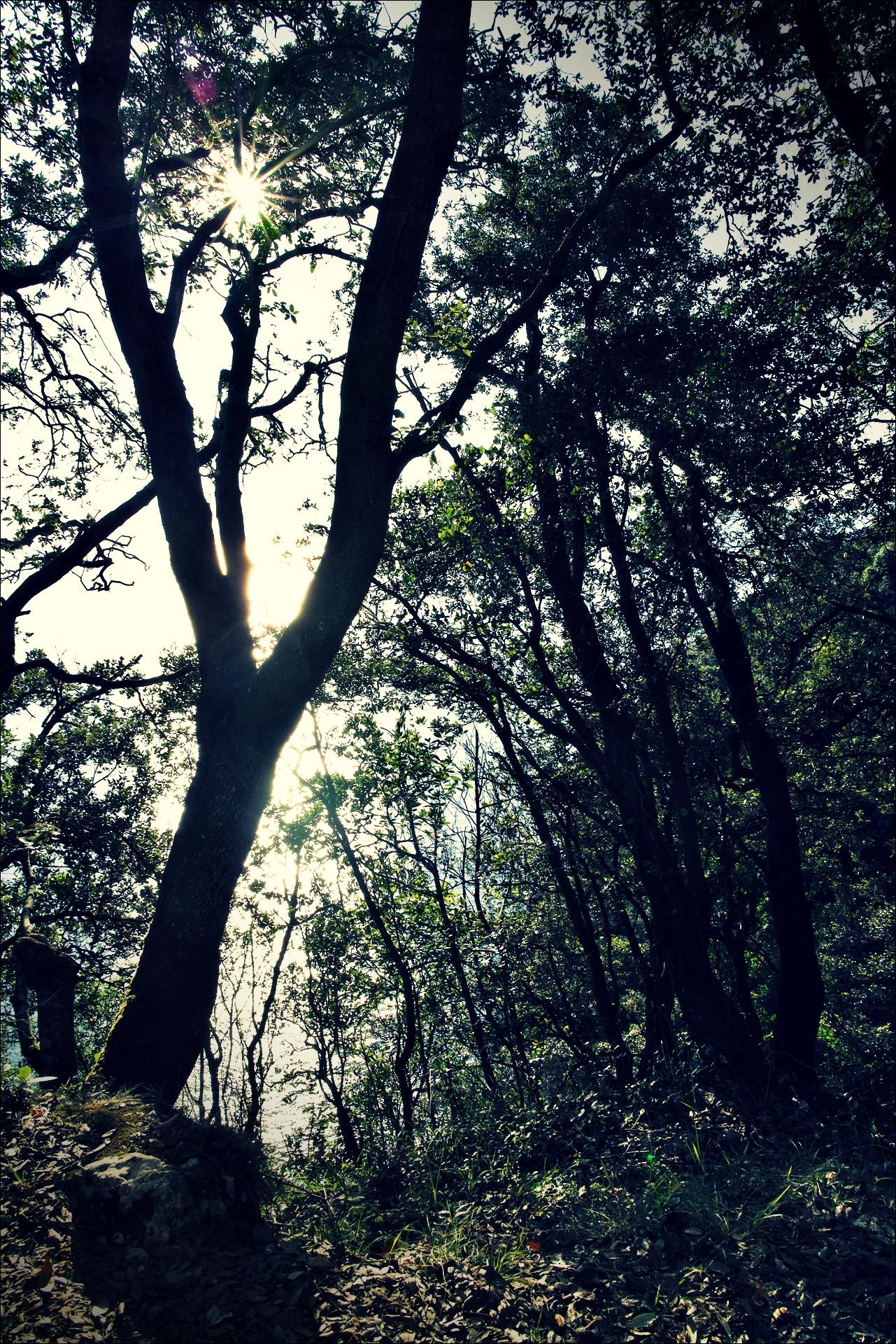 나무-'카미노 데 산티아고 북쪽길. 산토냐에서 노하. (Camino del Norte - Santoña to Noja)'