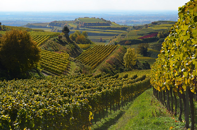 Vineyards, Kaiserstuhl, Germany