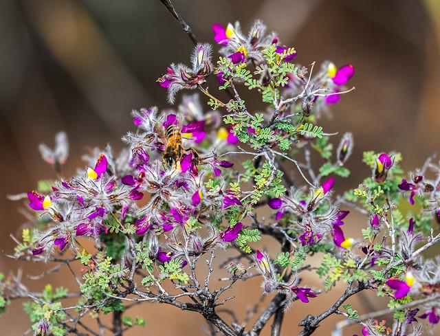 A-Flower-141-7D2-041017