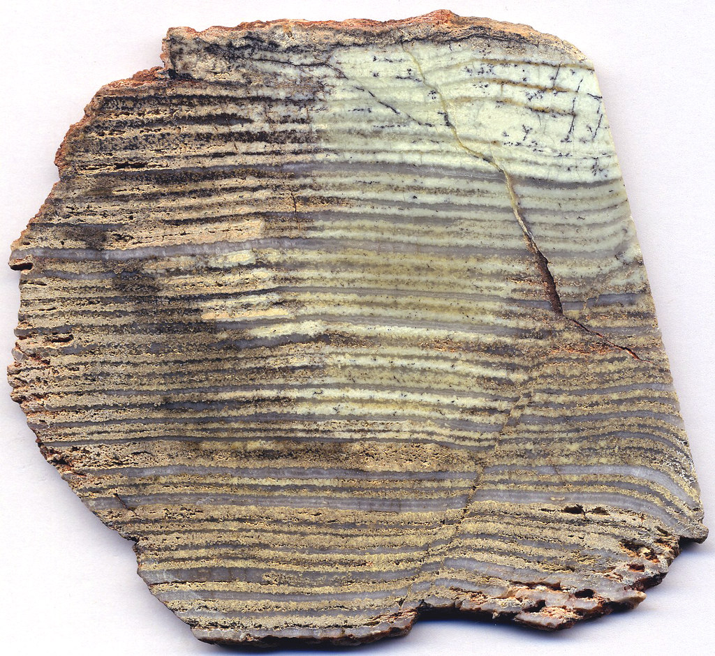Silicified Stromatolite Strelley Pool Formation Paleoarc