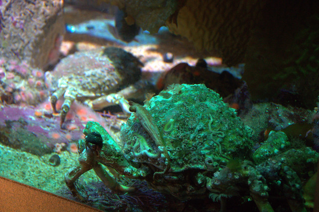 Monterey Bay Aquarium 4 Flickr Photo Sharing