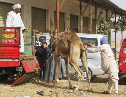 CamelMarket1-16