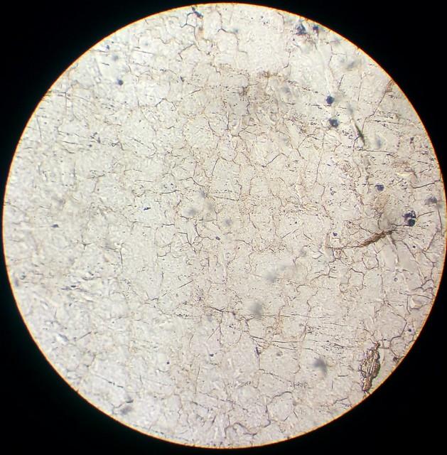 Quartz (30 µm thin section, PPL)