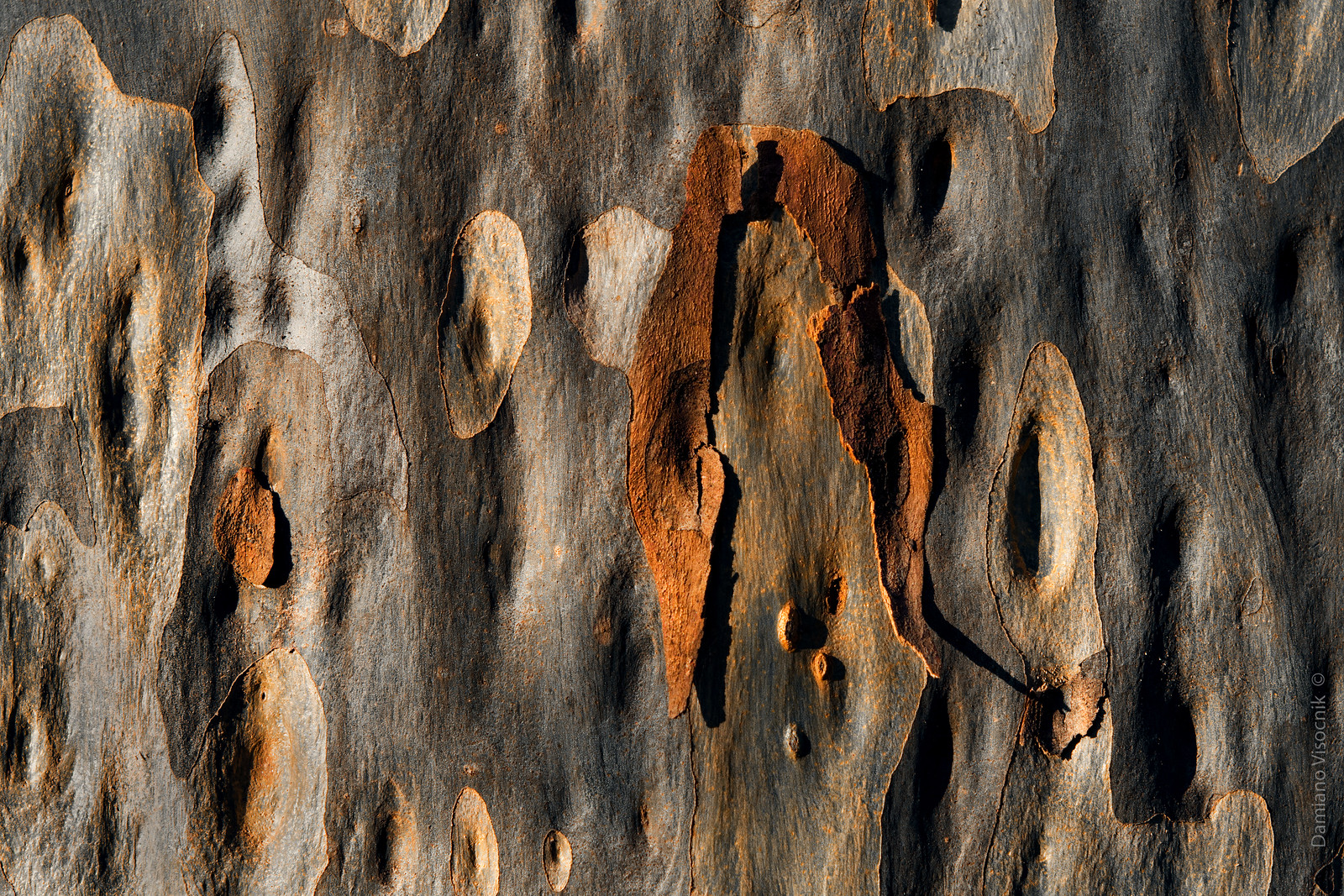Flaking bark