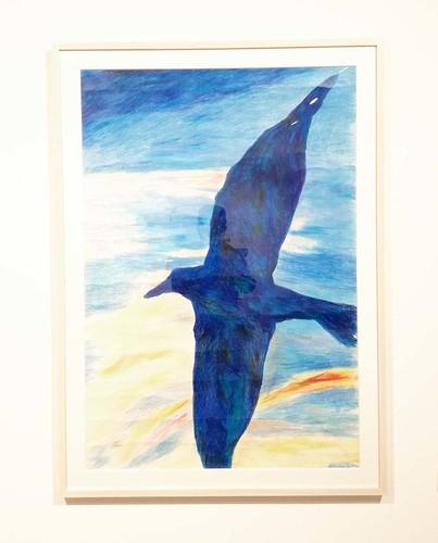 toomilog-riewen_birds_006