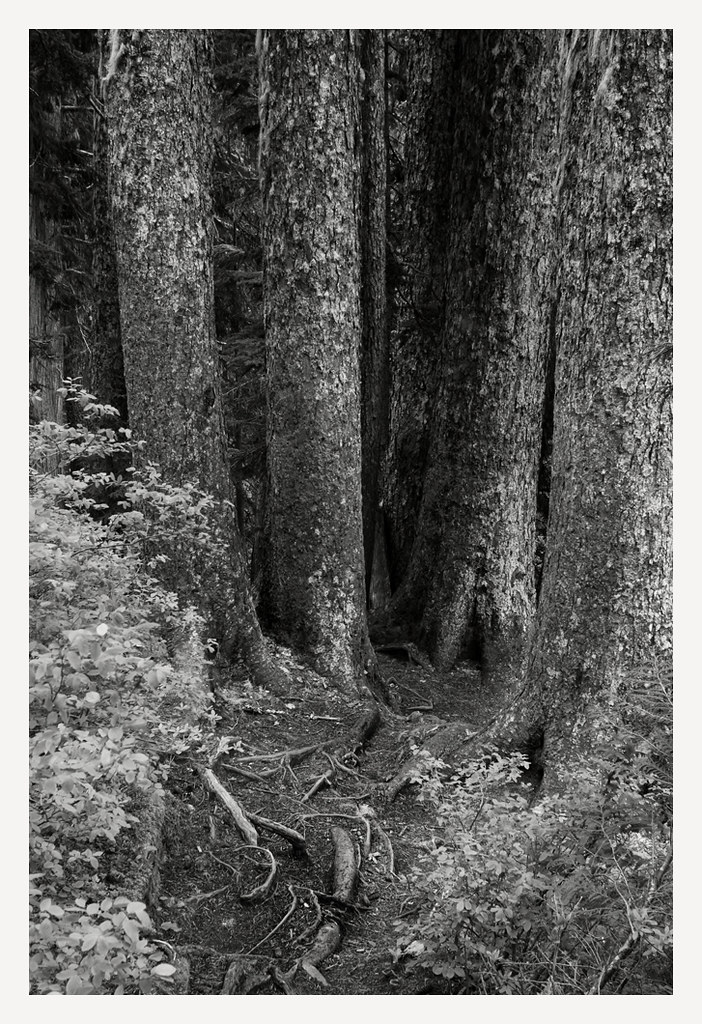 Forest Dr N Myrtle Beach Sc