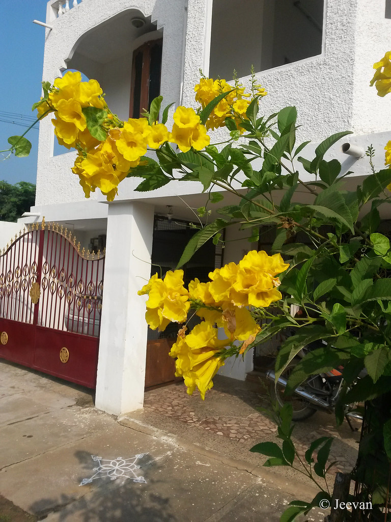 Jeevans World Gate And Yellow Bells