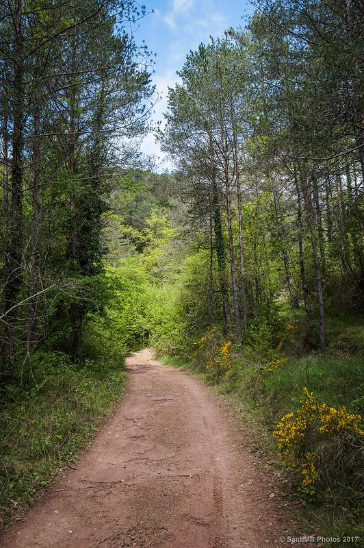 Subiendo por el camino del Barranc de la Font dels Cerdans