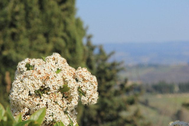 Looking out over the Elsa Valley, San Gimignano