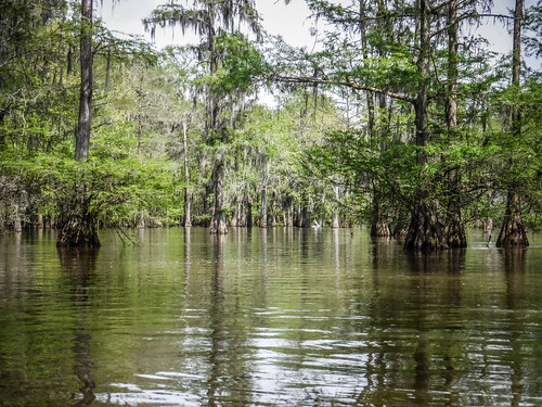 Sparkleberry Swamp-71
