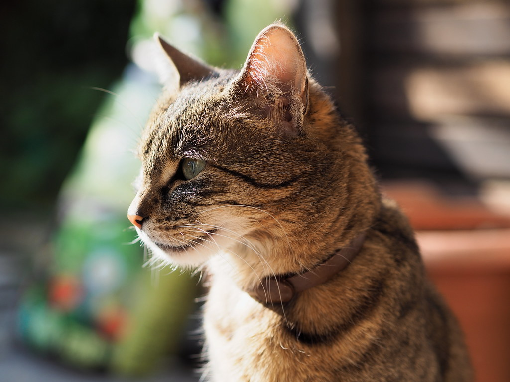 7e1_4016485-tuna | Tuna the cat, April 2017 | Wolfgang ... - photo#7