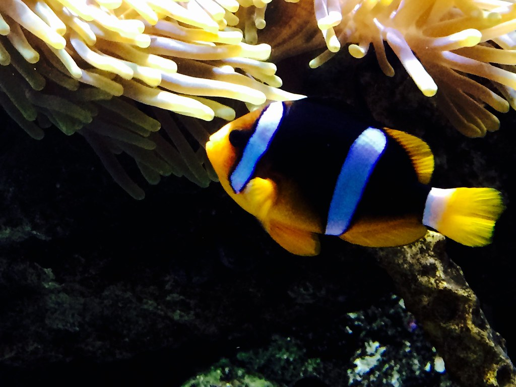Fish aquarium in jeddah -  Jeddah Aquarium Sea Fish By Edy Sarhan