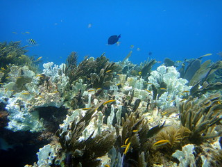 Partially bleached hard and soft corals on Molasses Reef | by mattk1979