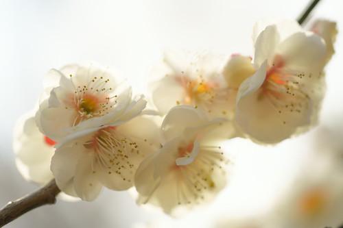 kairaku-en (11)