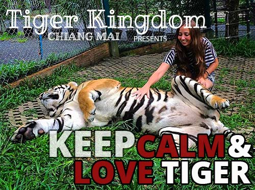 Chiang Mai Tiger Kingdom Thailand