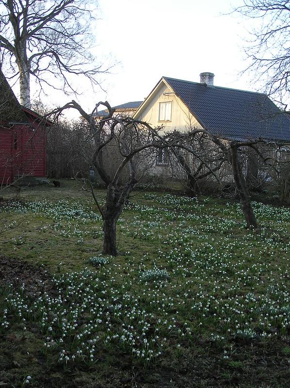Kärdla in Snowflakes, Hiiumaa