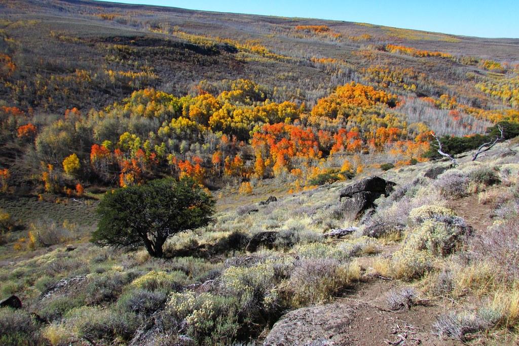 Fall Foliage Steens Mountain  Photo By Tom Wilcox BLM