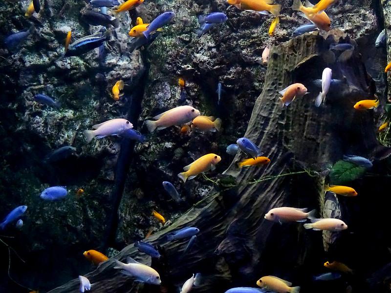 peixes coloridos no aquário