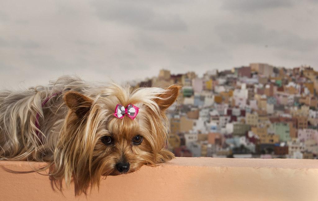 Chloe En Las Palmas De Gran Canaria Nenad Ivanovic Flickr